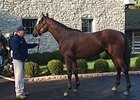 American Pharoah Poses at Ashford