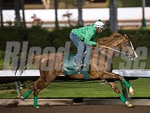 California Chrome worked three furlongs in :37 3/5 at Los Alamitos Race Course.