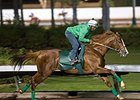 California Chrome Strong in Los Al Drill