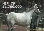 Keeneland November Sale: Hard Not to Like - Hip 79