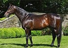 Top Sire Scat Daddy Dies at Age 11