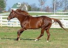 Smarty Jones Settles in at Calumet