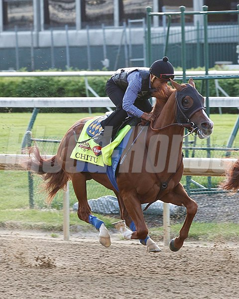 Churchill Downs; 2014; Work Out; Kentucky Derby; Works; Chitu