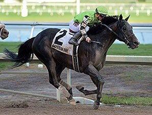 Horse For Course Valid Takes Harlan S Holiday Bloodhorse Com