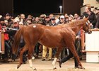 Hanky Panky Tops Tattersalls at 2.7M Guineas