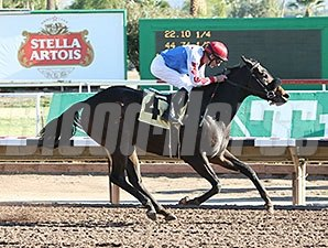 Winning Vision wins the 2015 Cactus Flower Stakes.