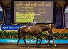 Pierro Yearlings Top Gold Coast Third Session