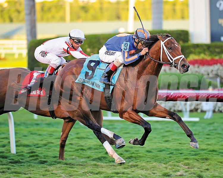 Gala Award is victorious in the $150,000 Palm Beach Stakes (gr. IIIT) at Gulfstream Park on March 1, 2014.