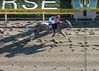 Japan-Based Tapit Colt Points to KY Derby
