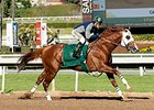 California Chrome Blazes in Santa Anita Drill