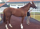 California Chrome to Run Feb. 25 in Dubai