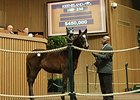 Arch Filly Second $450,000 Yearling