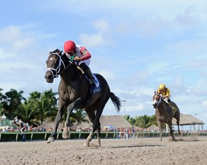 Tommy Macho Returns to Gulfstream for Hal's Hope