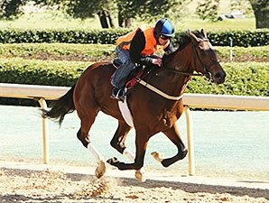 Suddenbreakingnews, Whitmore on Oaklawn Tab