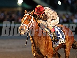 Mshawish wins the 2016 Donn Handicap.