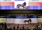 Starcraft Gelding Tops Hong Kong Sale
