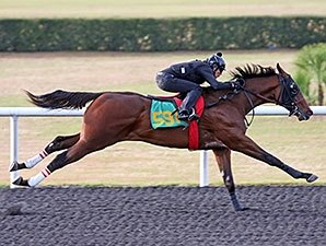 Smart Strike Colt Tops OBS Juvenile Sale