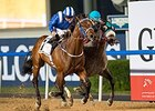 Muarrab Nails X Y Jet in Dubai Golden Shaheen