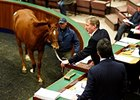 551 Cataloged for Tattersalls October Sale