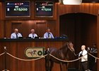 Malibu Moon Colt Brings $475,000 at OBS