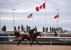 Woodbine's new Tapeta track open for training