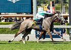 Tuttipaesi Rallies Late to Win Santa Ana