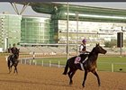 Dubai World Cup Horses Training March 21