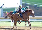 Eagle Wears Down Noble Bird in Ben Ali