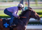 Exaggerator to WinStar After Racing