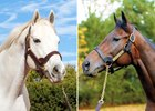 Derby Battle: Tapit vs. Uncle Mo