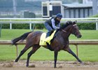 Exaggerator Works for Kentucky Derby Bid