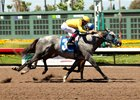 CA-Bred Colt First Winner for Creative Cause