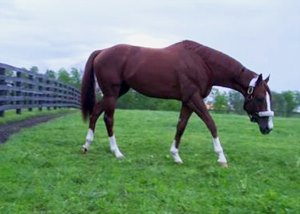 A Taylor Made Home for California Chrome