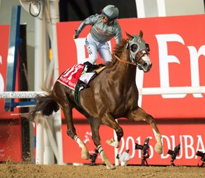 California Chrome's Dubai Win voted Moment of the Year