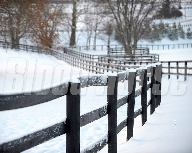 fencing Snow scenes in Central Kentucky (Grovendale Farm and WinStar Farm) on January 21, 2011.