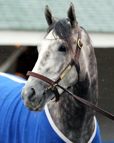 Behind The Sale Of Creator As A Yearling Bloodhorse Com