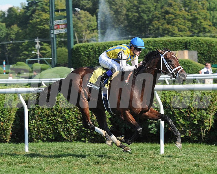 Dominus wins the Bernard Baruch Handicap (gr. 2) Jockey: Julien Leparoux SARATOGA, Saratoga Springs, NY Purse: $250,000 Date: September 1, 2012 Class: Grade 2 TV: HRTV/TVG Age: 3 yo's & up Race: 8 Distance: One And One Sixteenth Miles Post Time: 4:39 PM