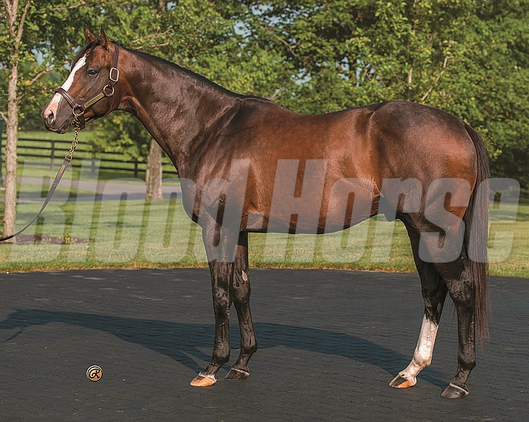 Bodemeister Conformation at WinStar Stallions Photo by: Louise Reinagel: Must Be Paid For Editorial Usage