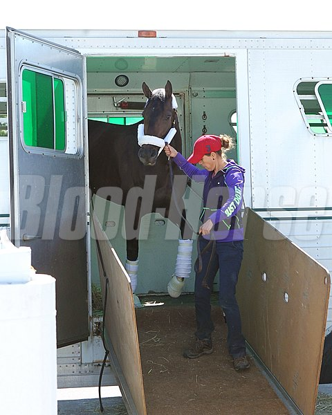 Tepin - Arrival - Keeneland - April 16, 2016 Trainer: Mark E. Casse Owner: Robert E. Masterson Breeder: Machmer Hall