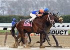 Wood Winner Outwork in Good Order, Derby Next