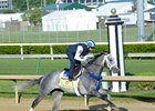 Mohaymen Sitting on Go for Kentucky Derby