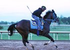 Laoban Works Toward Preakness ... or Derby