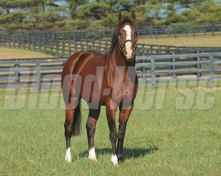 Union Rags at Lane's End