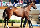 Redoute's Choice Colt Tops Easter Sale Day 2
