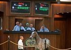 Gemologist Colt Goes for $550,000