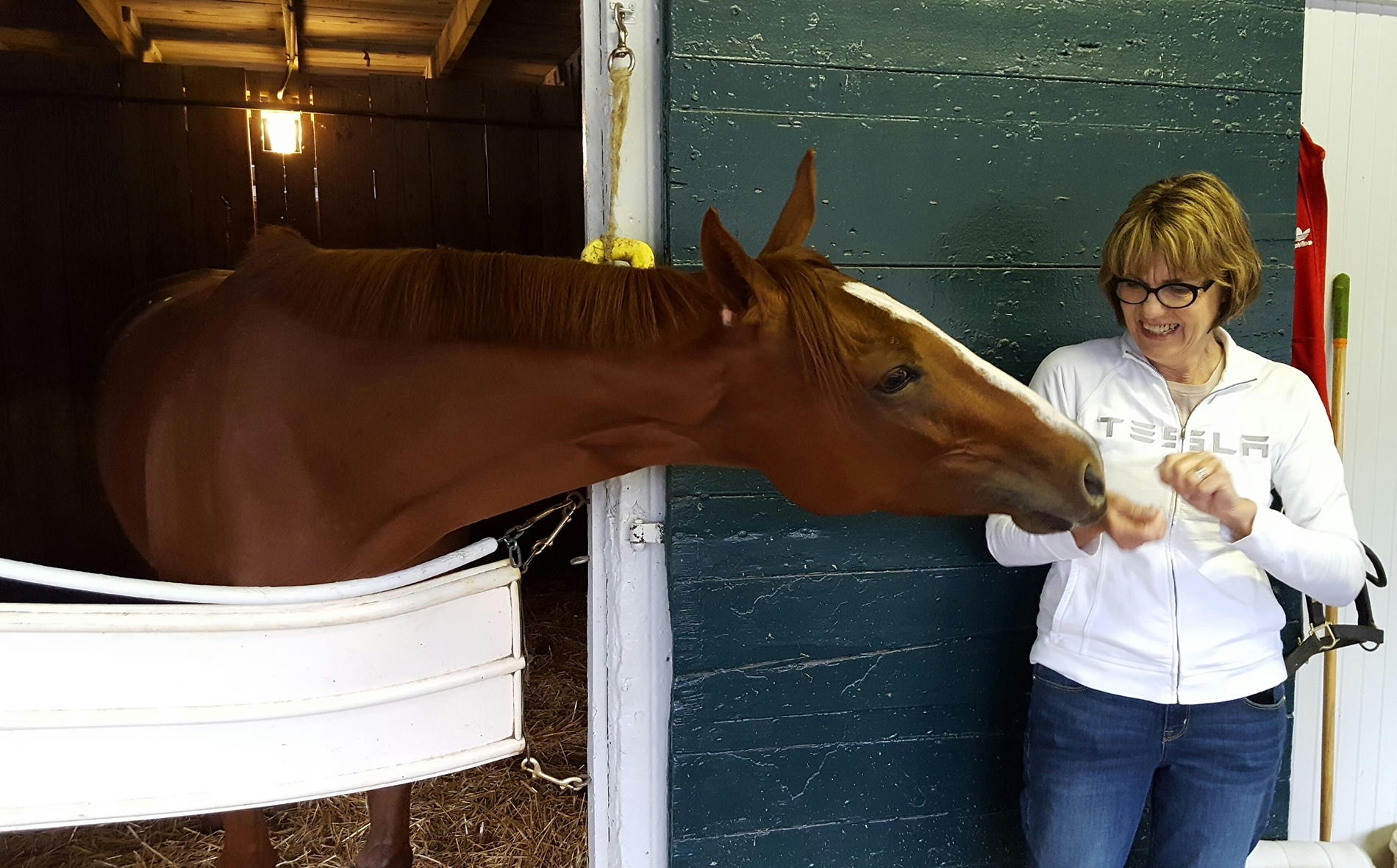 bloodhorse.com - Claire Novak - Multiple Grade 1 Winner I'm a Chatterbox Retired