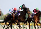 Sinhalite Dominates in Japanese Oaks