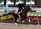 Nyquist, Exaggerator Stretch Legs at Pimlico