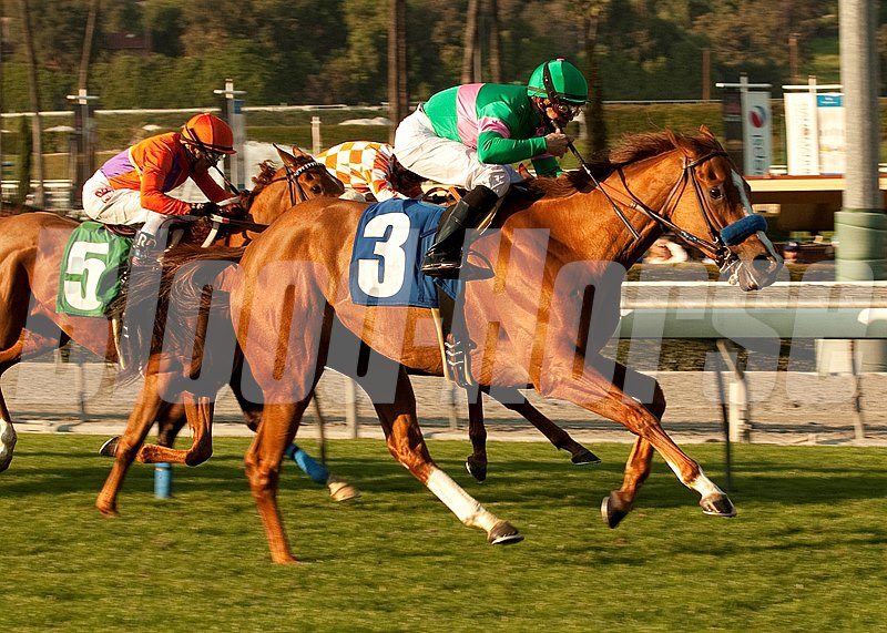 Jerry and Ann Moss' Cozi Rosie and jockey Mike Smith win the Grade II, $150,000 Buena Vista Handicap, Monday, February 21, 2011 at Santa Anita Park, Arcadia CA.