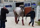 Last Preakness Runners Arrive at Pimlico